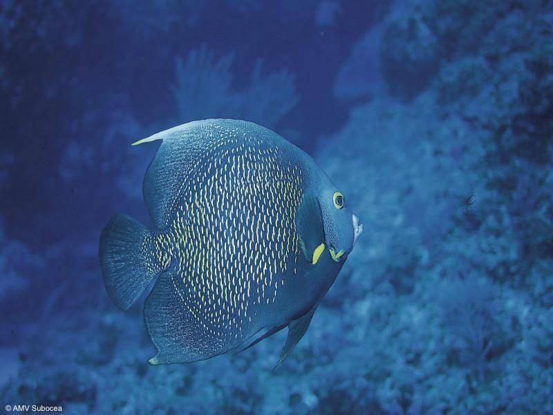 Discover the best dive centers in Belize