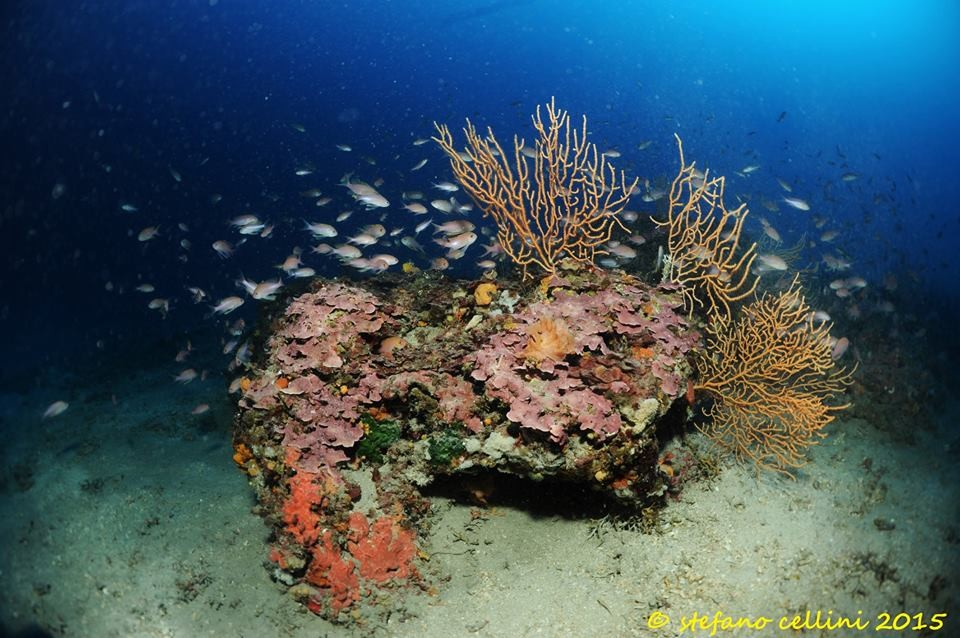 Discover the best dive centers in Italy