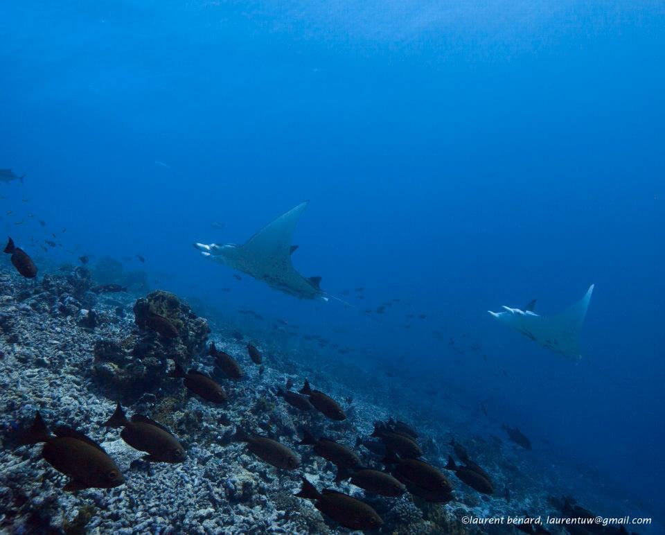 Diving in French Polynesia and Tahiti : Only the best dive