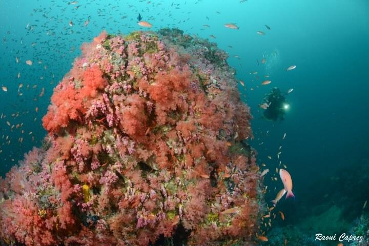 Discover the best dive centers in The Philippines