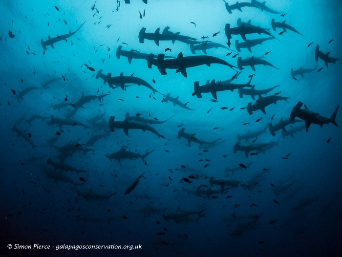 Discover the best dive centers in Galapagos