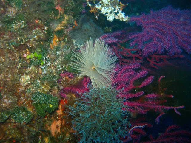 Discover the best dive centers in Bay of Ajaccio
