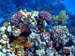Padi AWARE Coral Reef Conservation Specialty Course