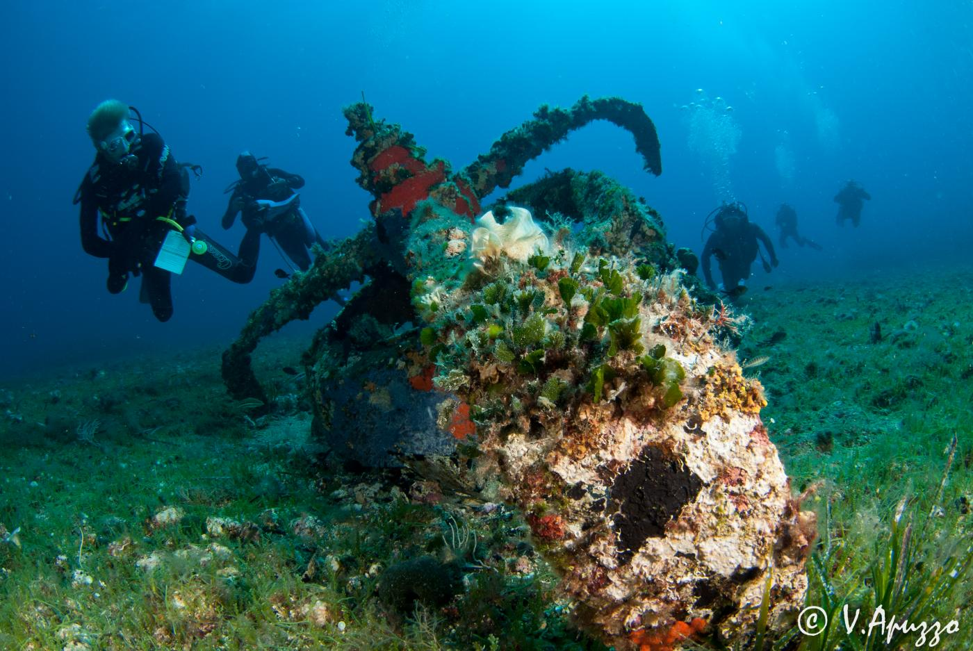 Nautilus diving center palau sardinia review for Dive centres