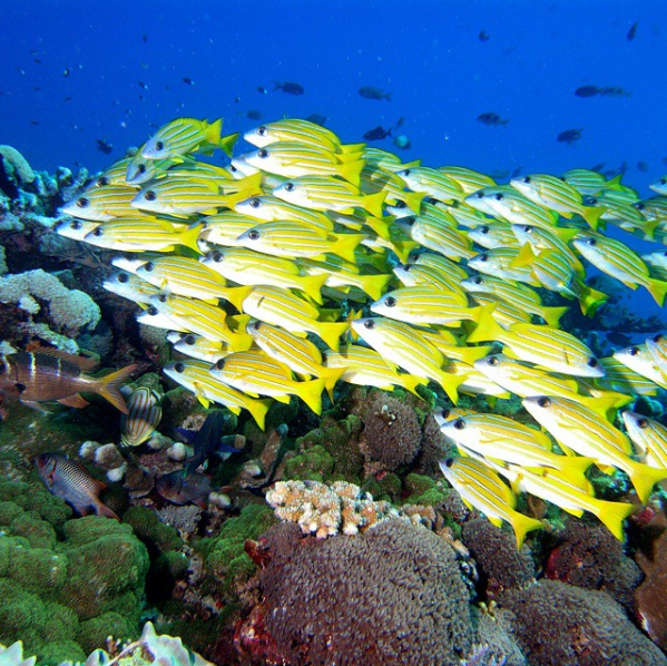 Avillion Layang Layang Dive Center