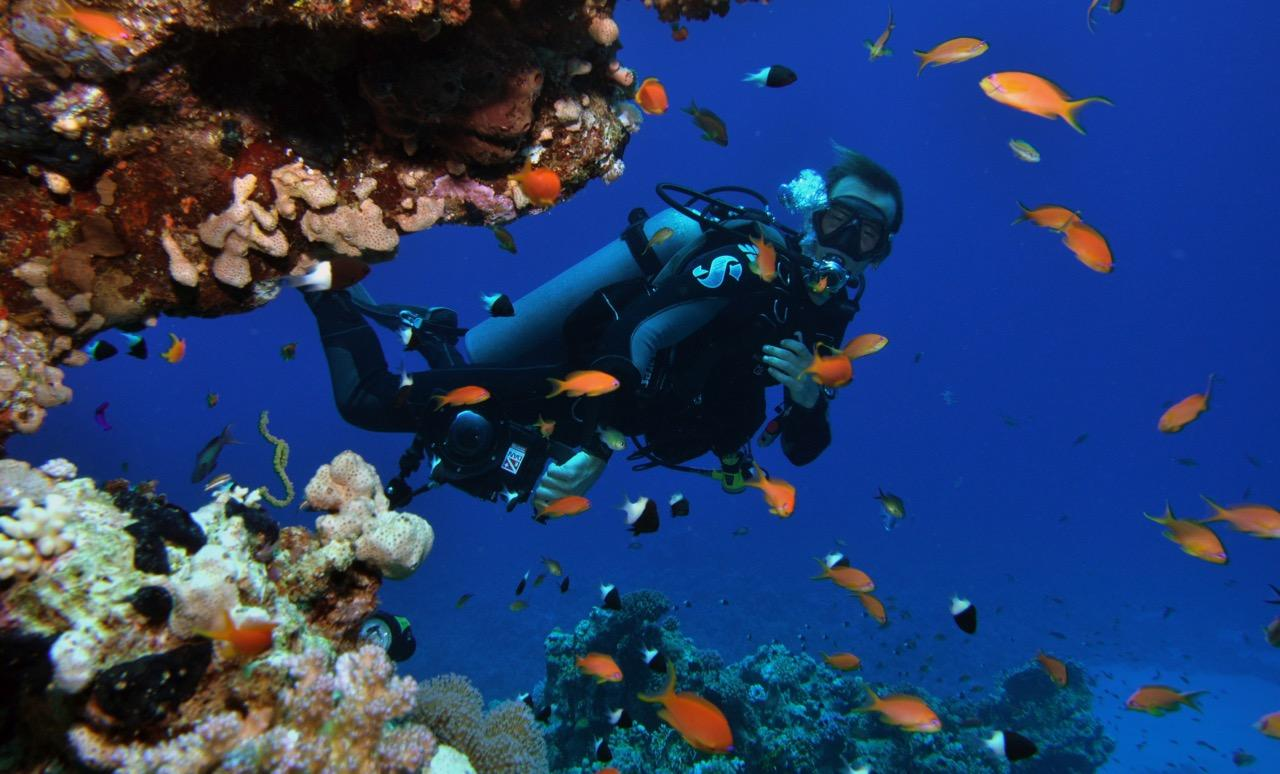 The reef oasis dive club dive center sharm el sheikh egypt - Reef oasis dive club ...
