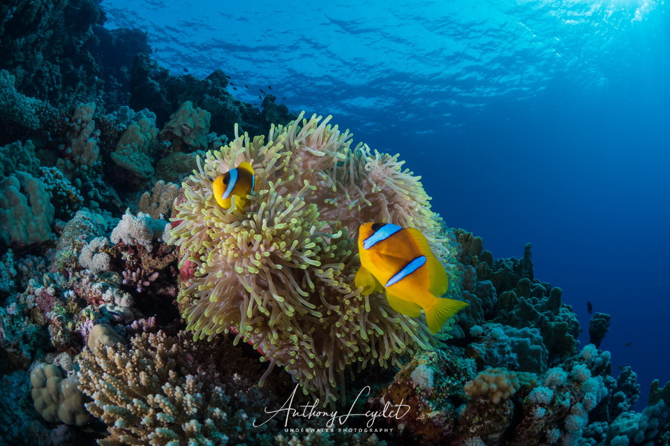 Beginner divers: which destinations to choose?