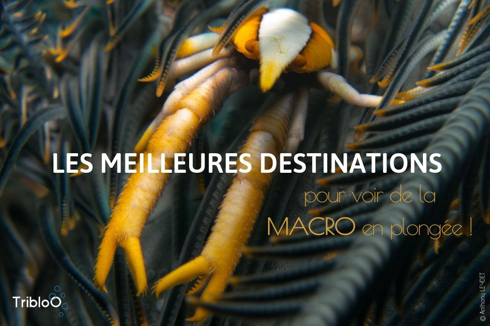Best destinations for macro diving